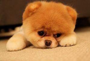 animales-tristes-7